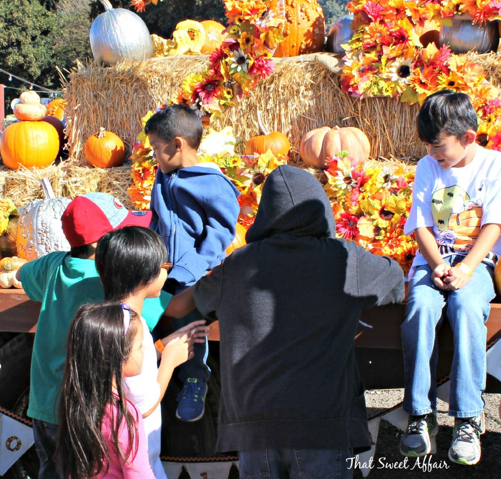 pumpkin patch group
